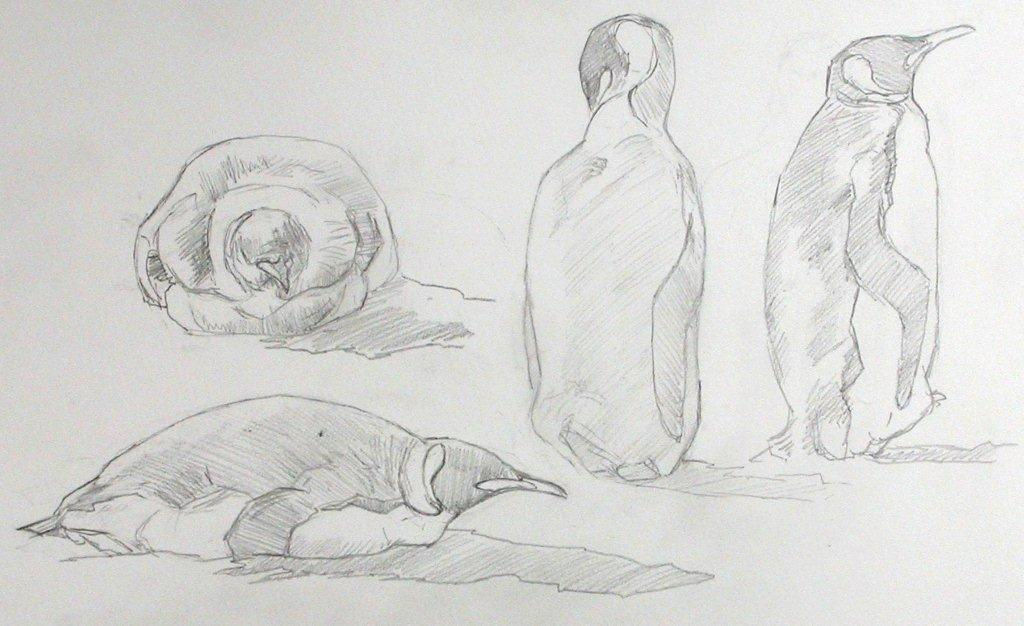 Field sketches of King Penguins