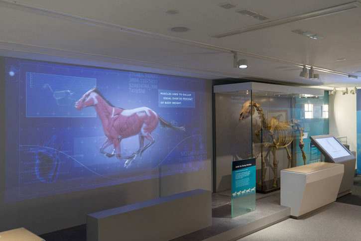 The Racing Machine in the Maktoum Gallery of the Thoroughbred