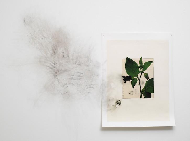 Untitled (belladonna)