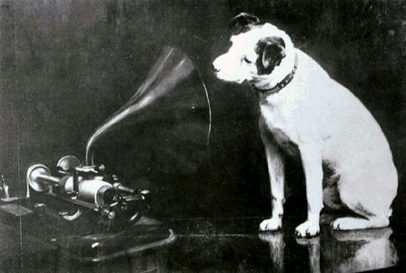 Dog looking at and listening to a phonograph
