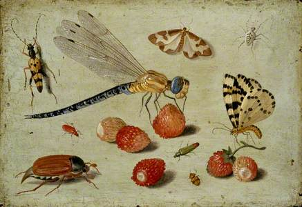 A Dragon-fly, two Moths, a Spider and some Beetles, with wild Strawberries