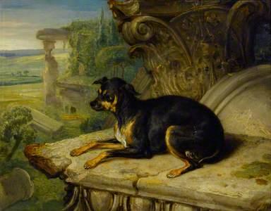 Fanny, a Favourite Dog