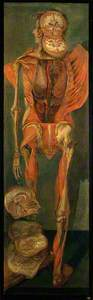 A Standing Dissected Man, Posterior View, with Separate Sections of the Brain