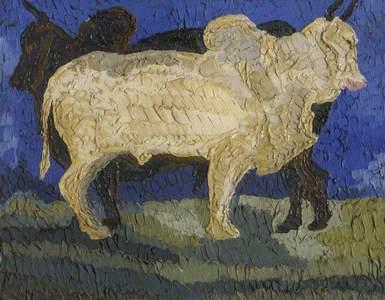 Brahmin Bulls (Zebus)