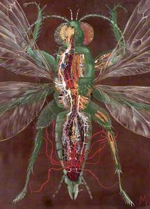 Insect Dissection
