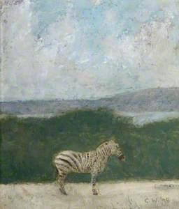 Zebra on Cavehill