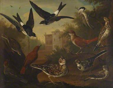 British Birds: Cock Skylark; Hen Beam Bird; Hen White Wagtail; Hen Blackcap; Cock Nightingale; Hen N