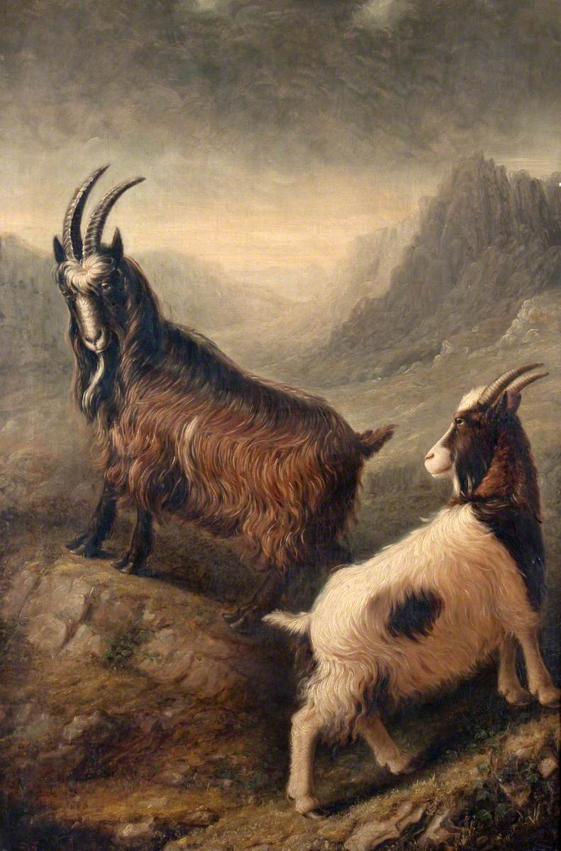 Two Welsh Goats