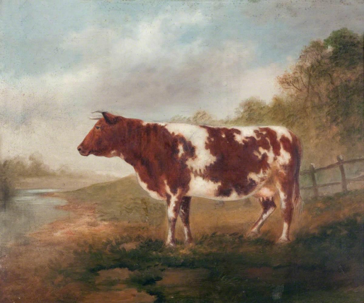Cow in a Field, Berthlwyd Farm, Pontypridd