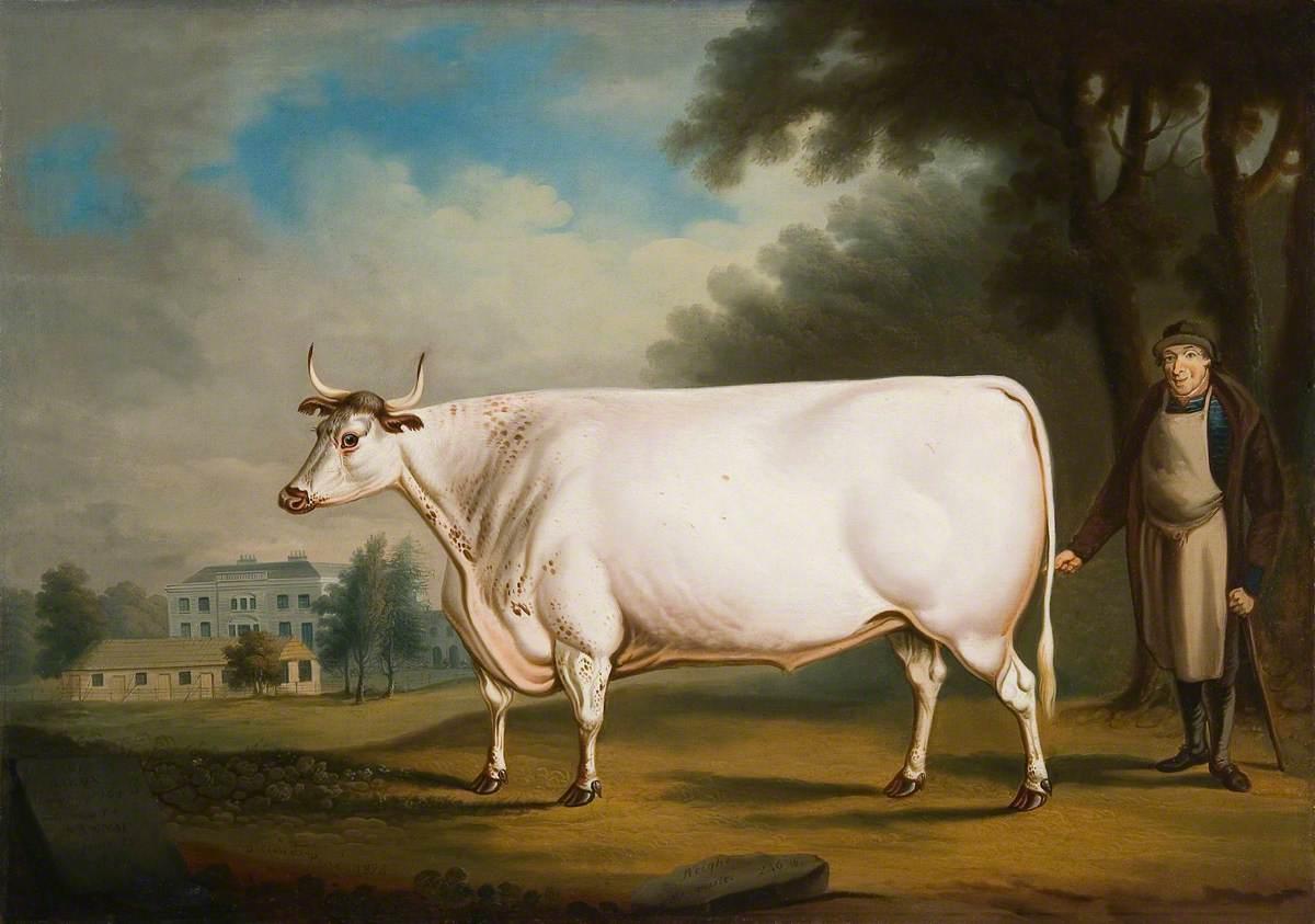 The White Ox of Nannau