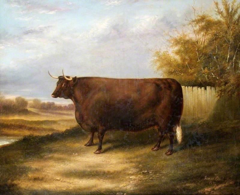 Sussex Cow 'Joan'