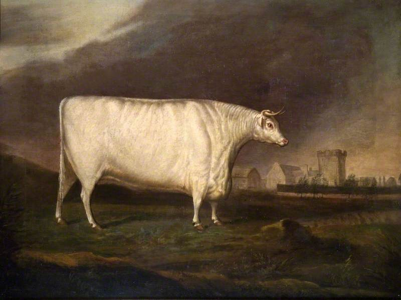 The White Ox