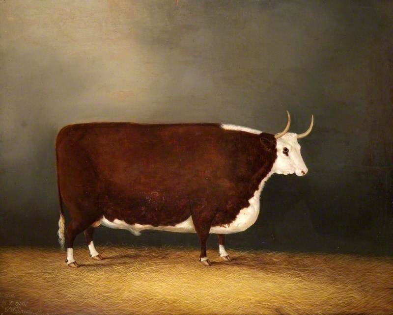 Hereford Ox
