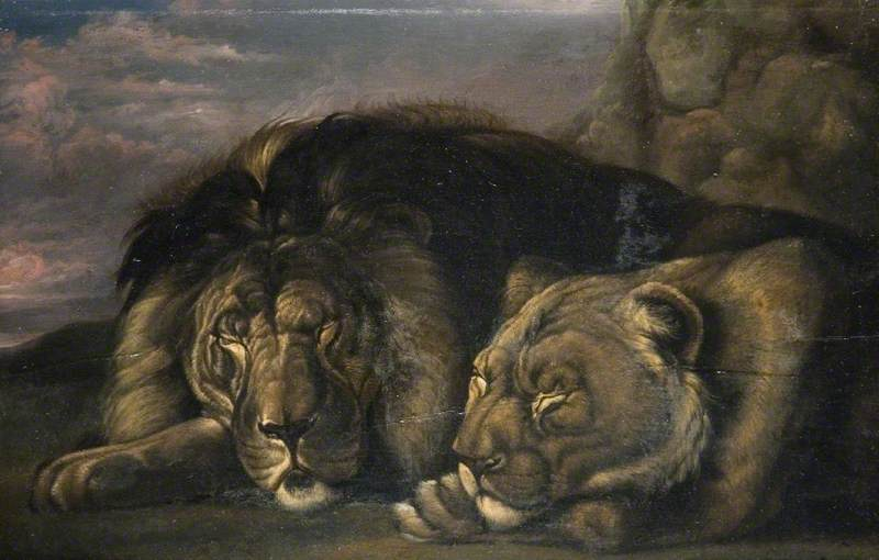 pics of lion and lioness together