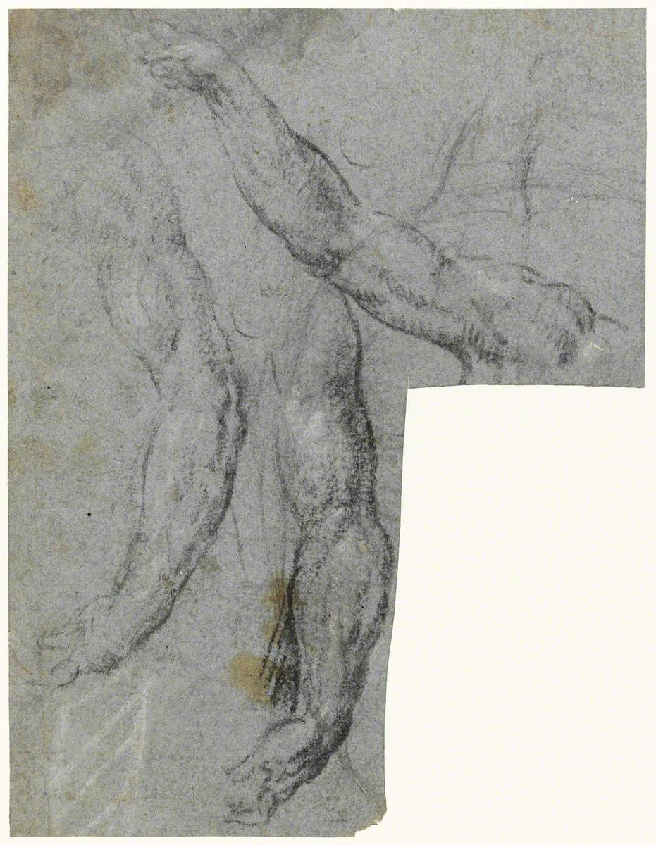Study of Arms