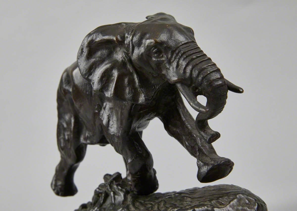 Éléphant du Sénégal
