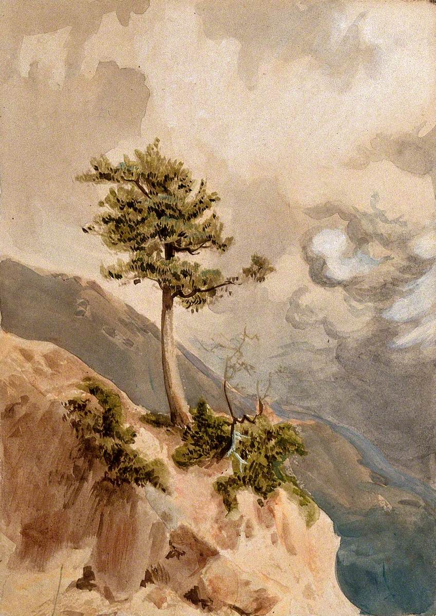 Young Juniper Tree (Juniperus Nigra) on a Ridge Top in Nepal