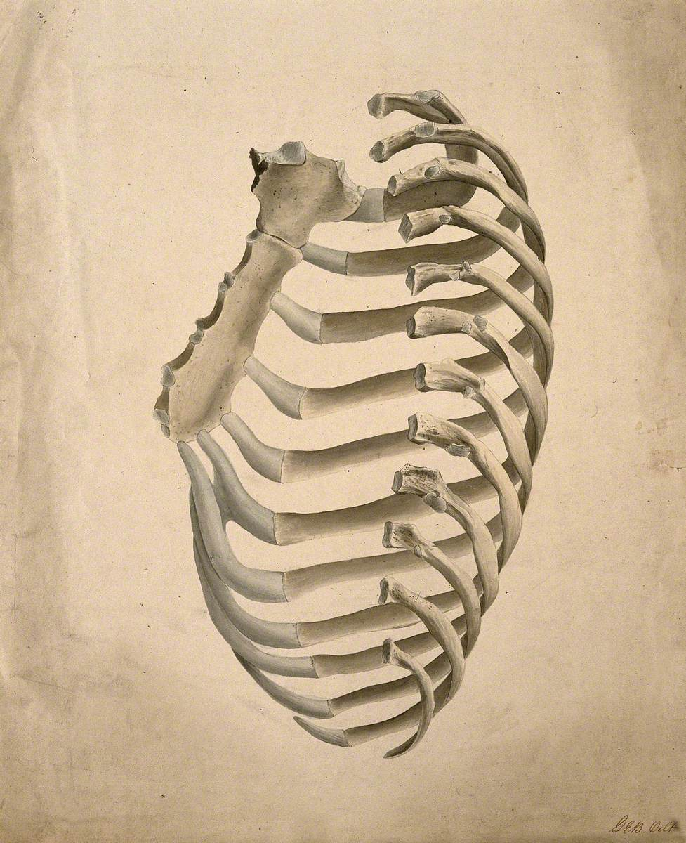 what is under right rib cage
