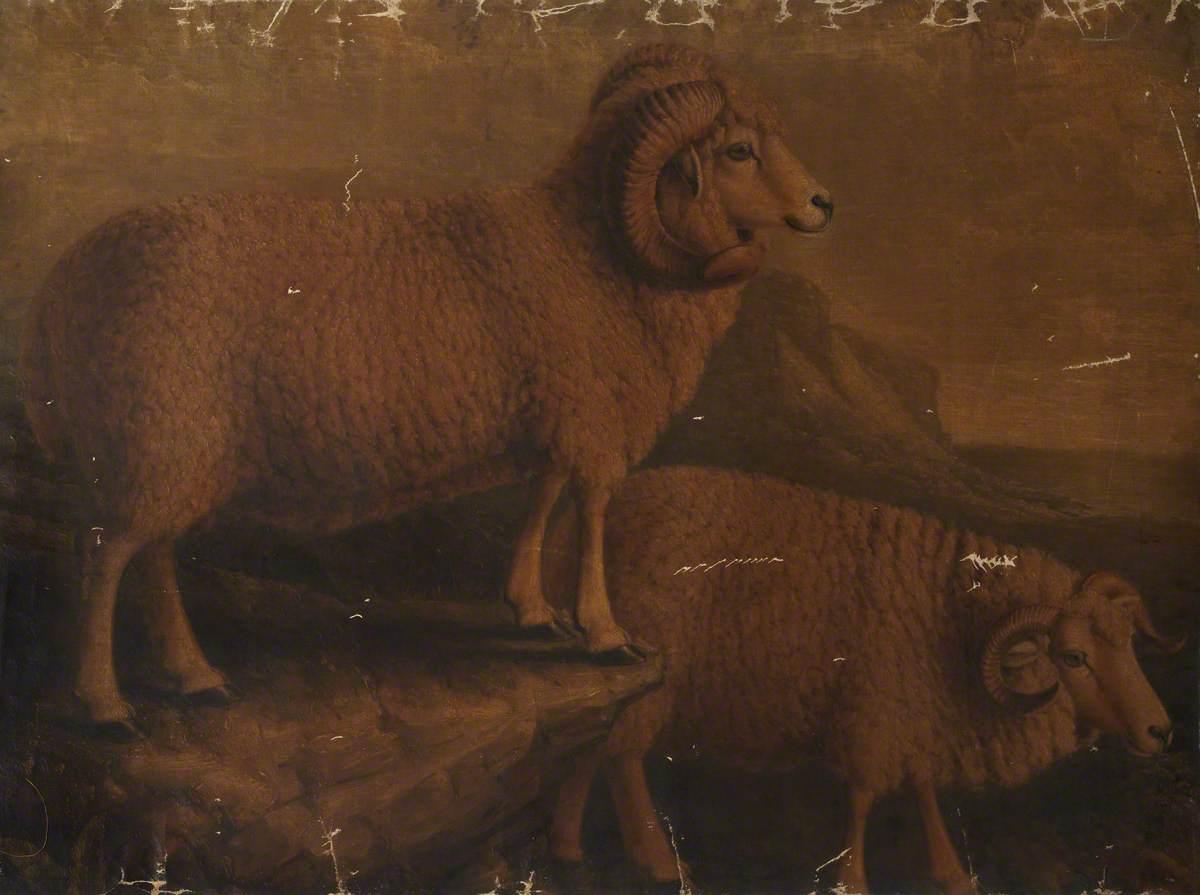 Dorset Ram and Ewe