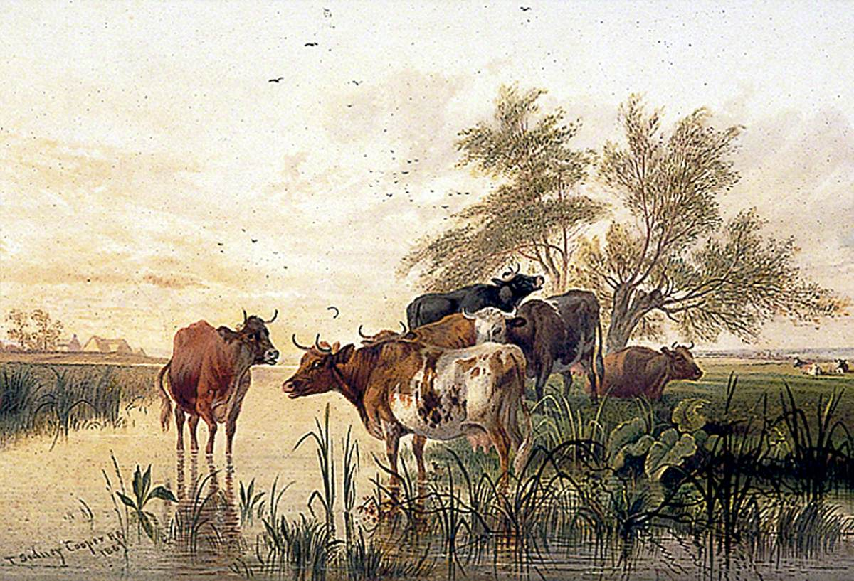 Cattle in a Water Meadow