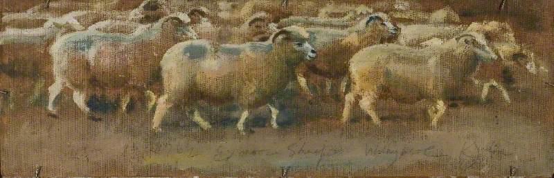 Sheep Studies