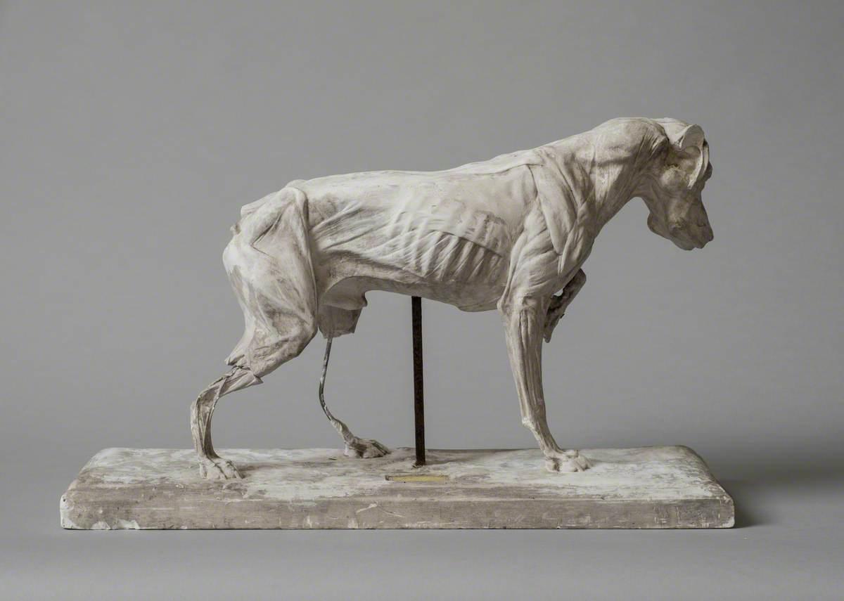 Anatomical Model of a Dog
