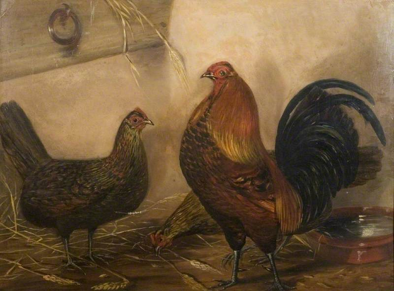 Cock and Two Hens