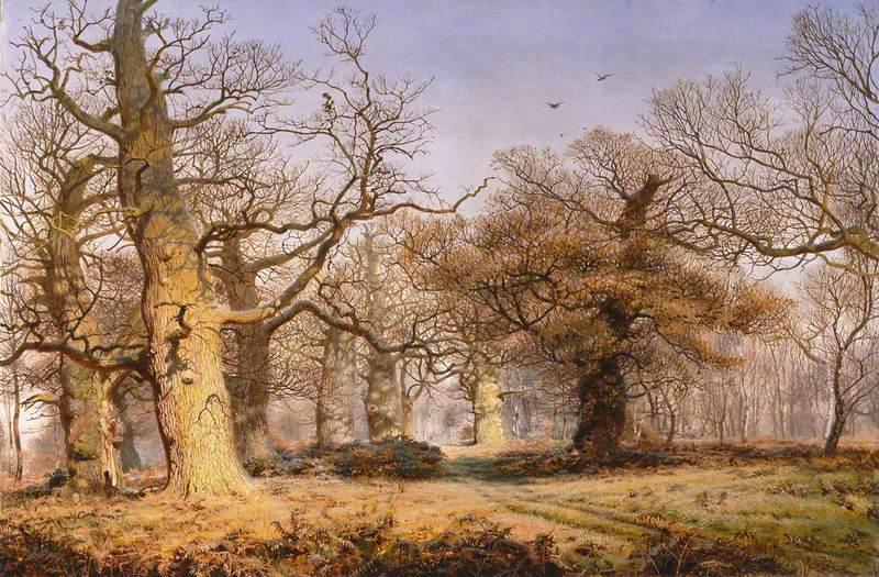 Oak Trees in Sherwood Forest