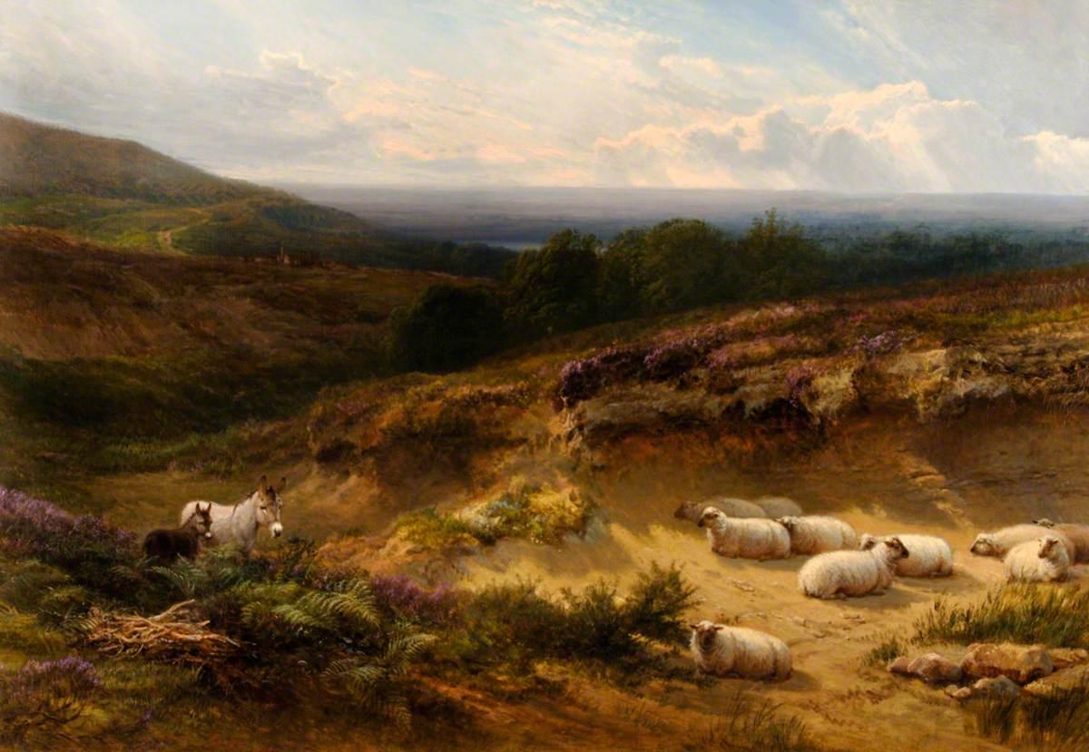 Hampshire Moorland