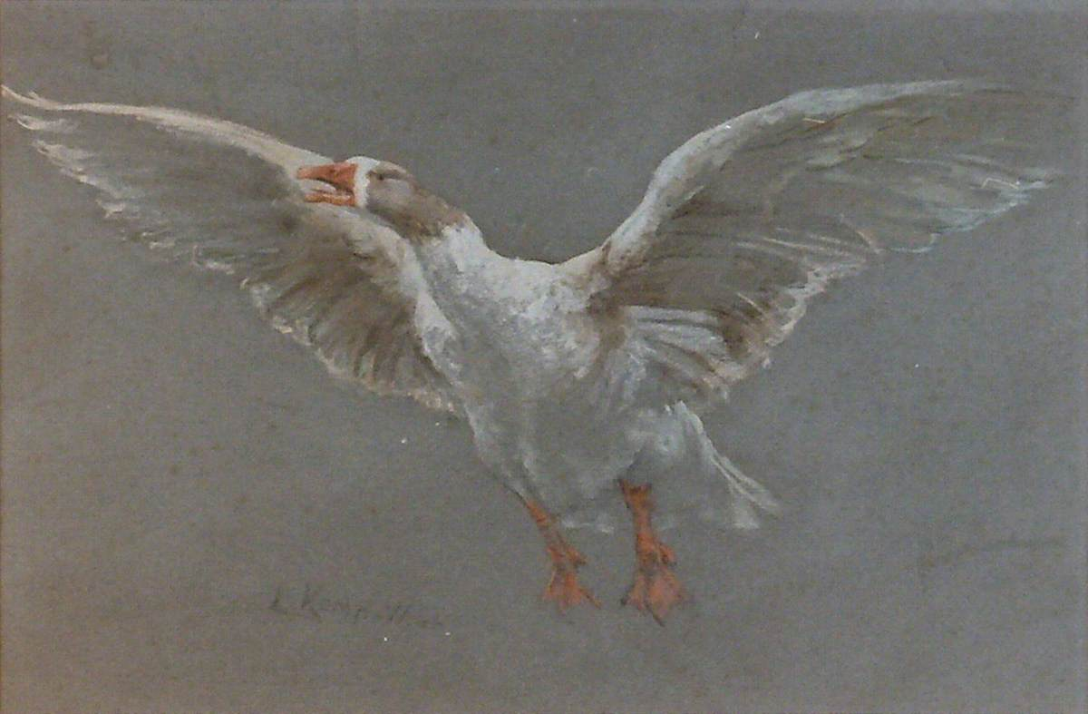 Study of a Goose Taking Flight
