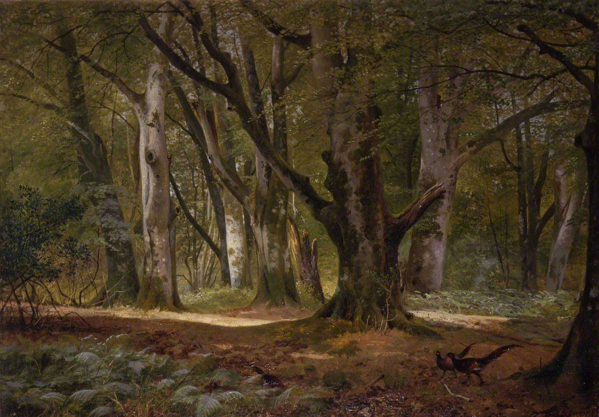 In the Shade of the Beeches, Buckhurst Park, Kent