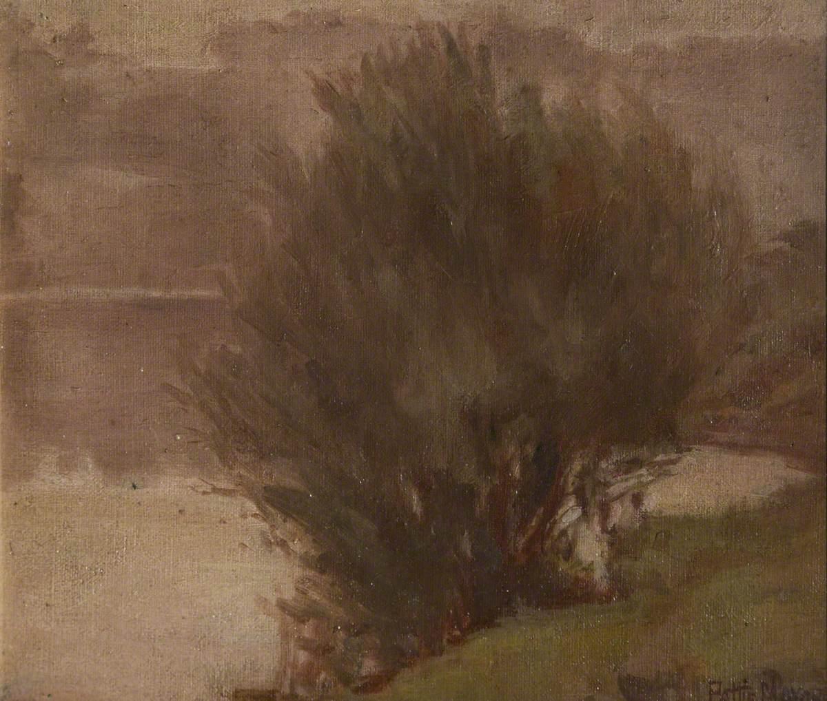 Bush by a River