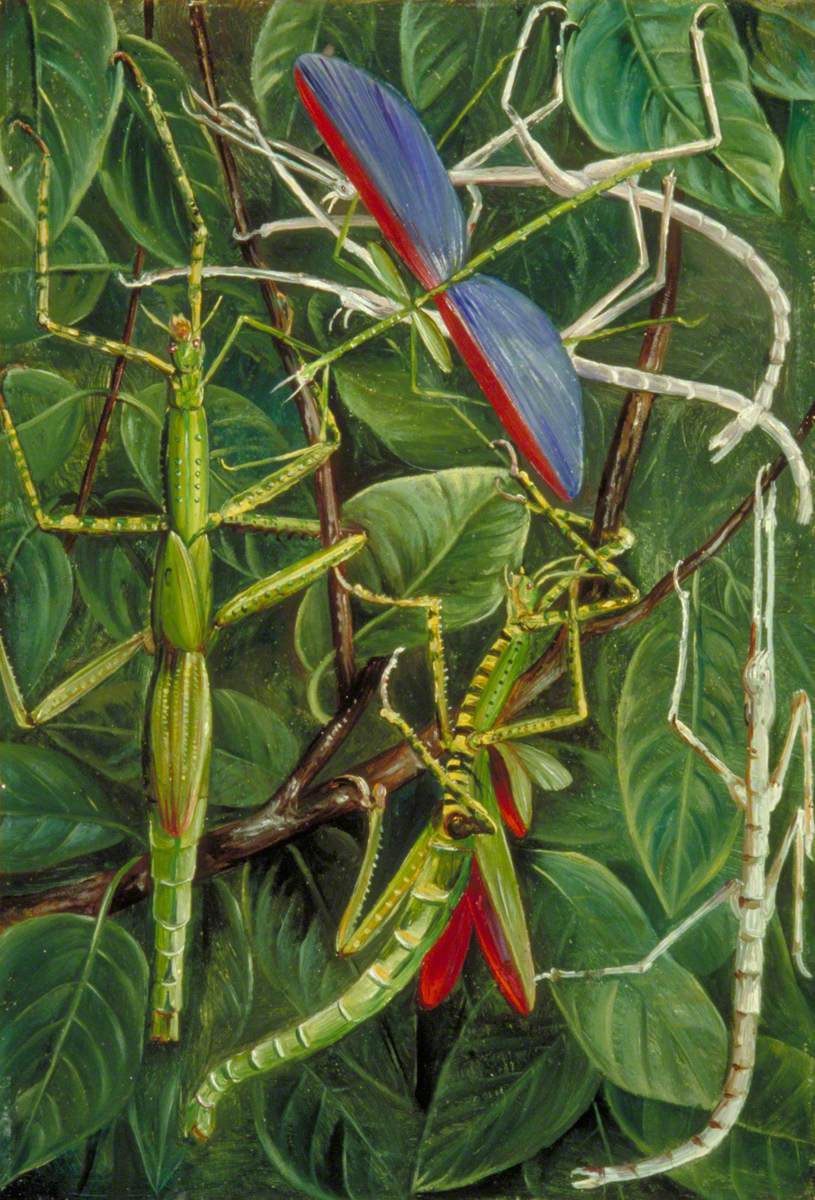 Leaf-Insects and Stick-Insects