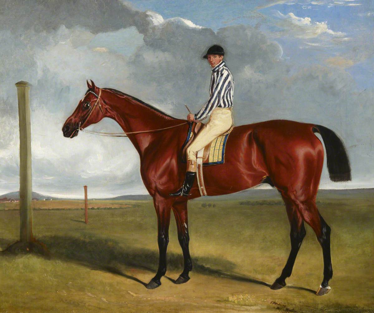 Bay Racehorse and Rider