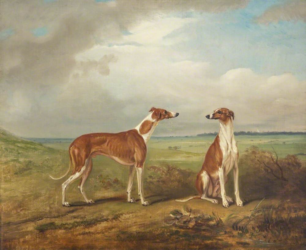 A Pair of Greyhounds