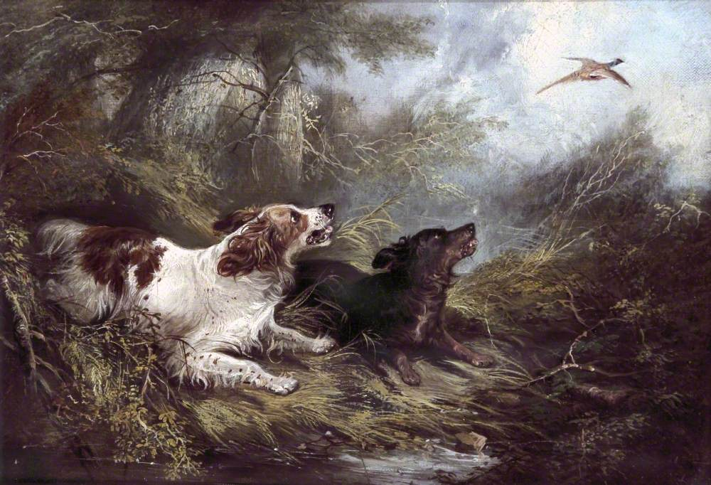 Two Spaniels Putting Up a Pheasant