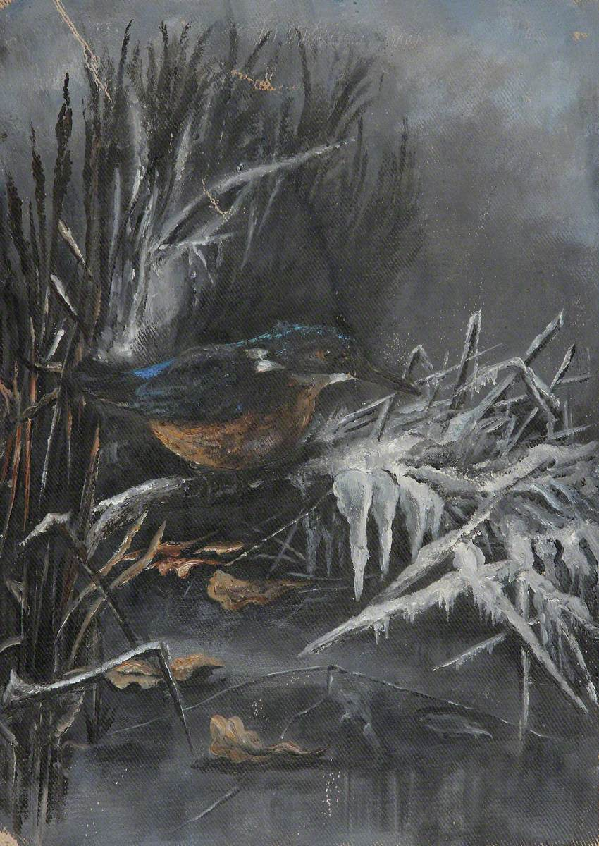 A Kingfisher in Reeds