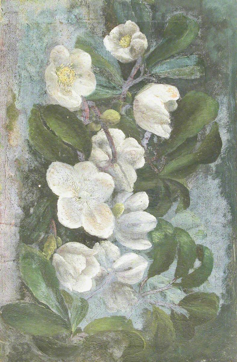 Christmas Roses (Hellebores)