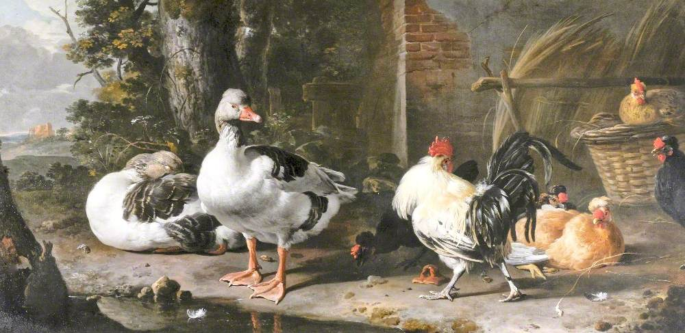 Fowl and Geese