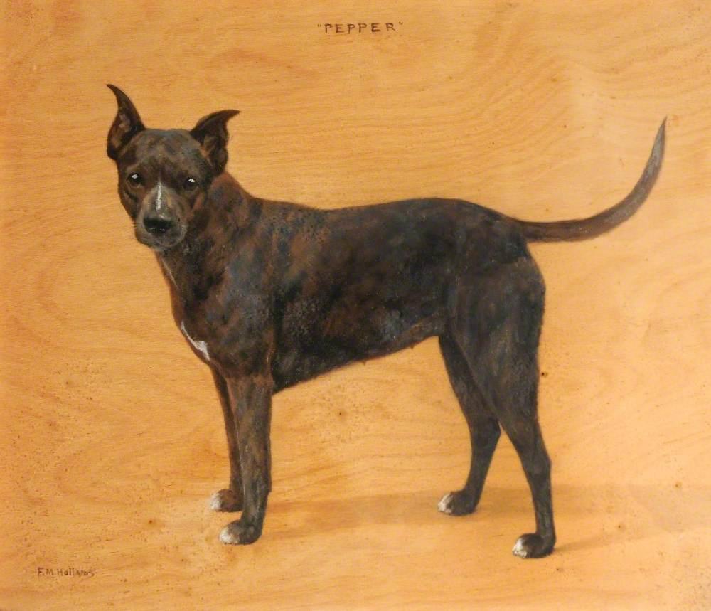 'Pepper', a Brown Bull Terrier