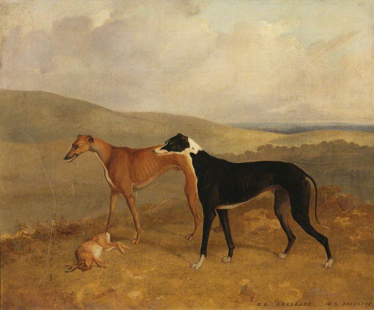 Two Dogs, Called 'Dotterel' and 'Defiance'