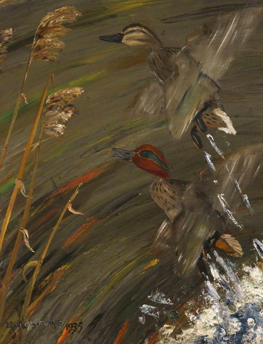 Widgeon Rising