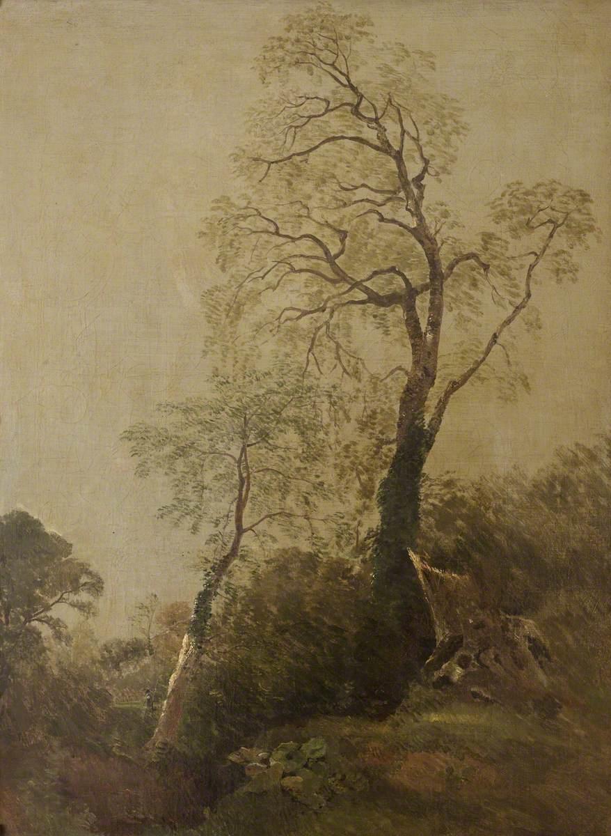 Birches in Helmingham Park, Ipswich (?)