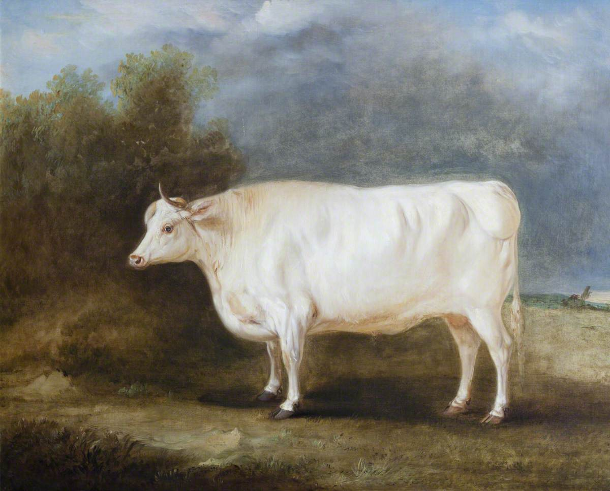 A Prize Ox in a Landscape