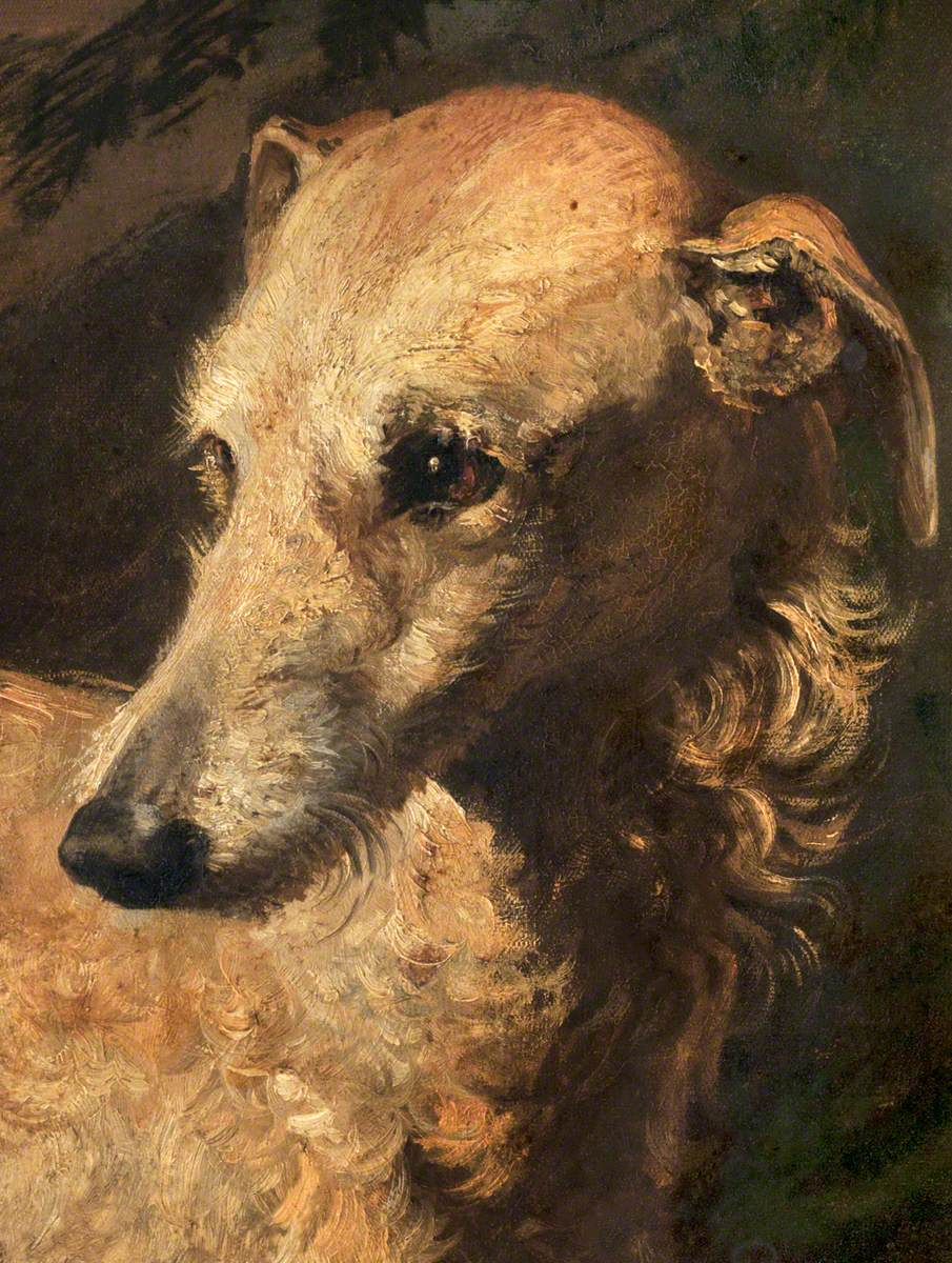 Head of 'Driver', a Deerhound Owned by the 5th Duke of Gordon