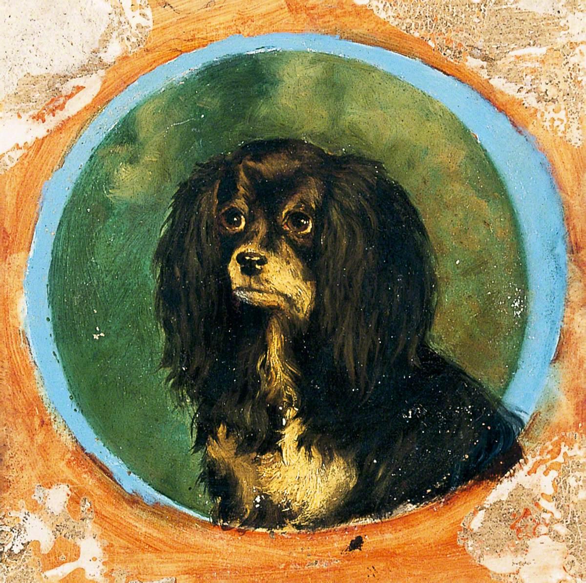 A Blenheim Spaniel