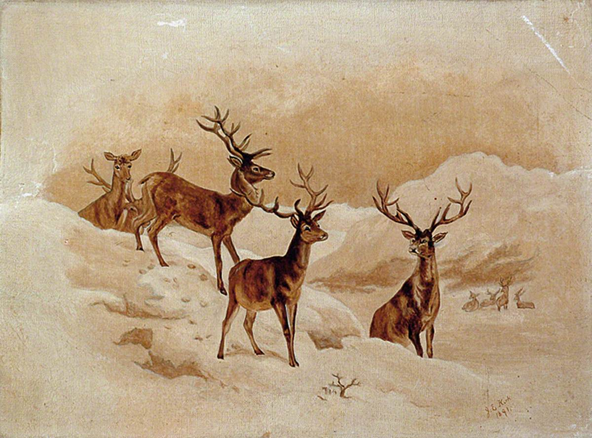 Stags in the Snow