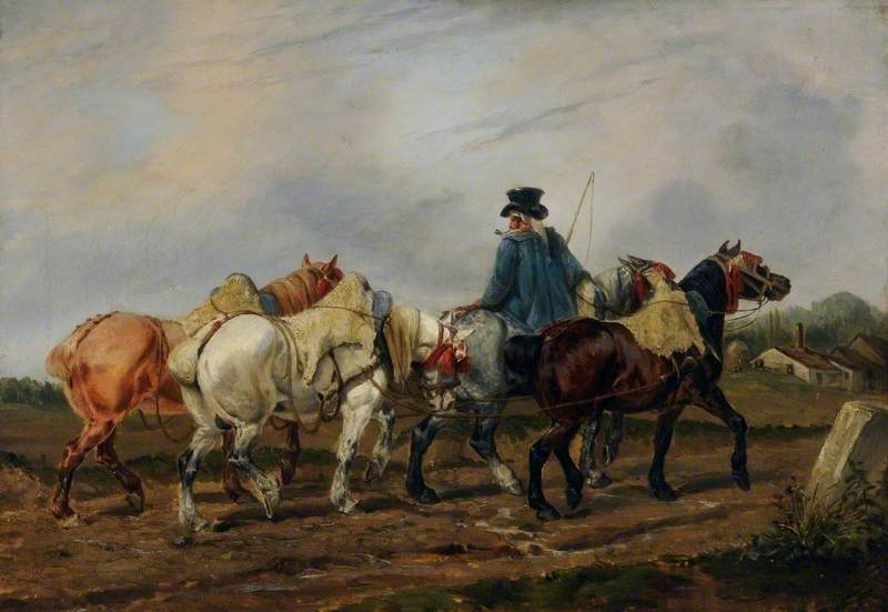 French Percheron Horses