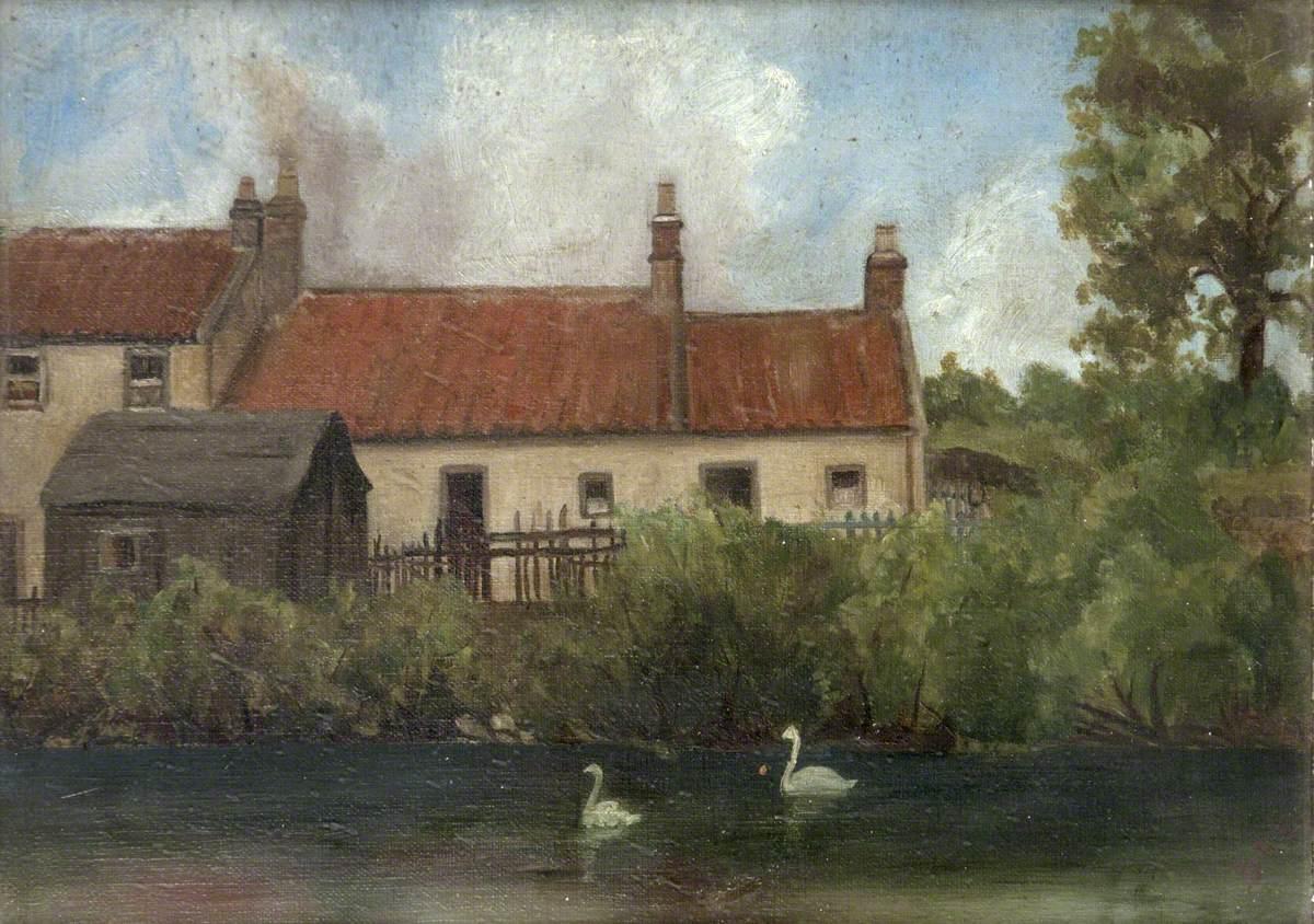 Swans in the Village Stream