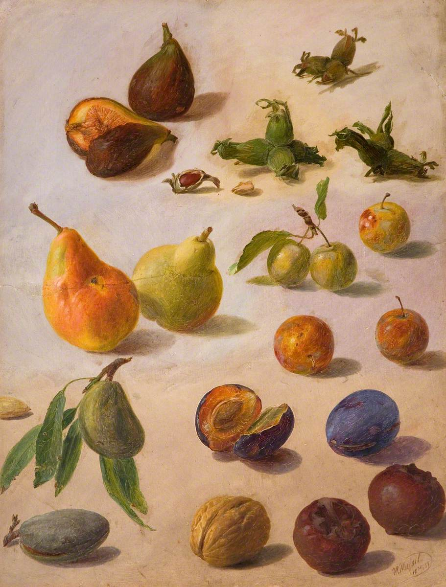 Study of Fruit and Nuts